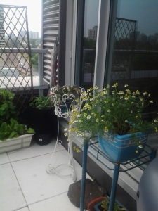 Growing 1 chamomile plant saved us a couple of hundred dollars in vet bills!